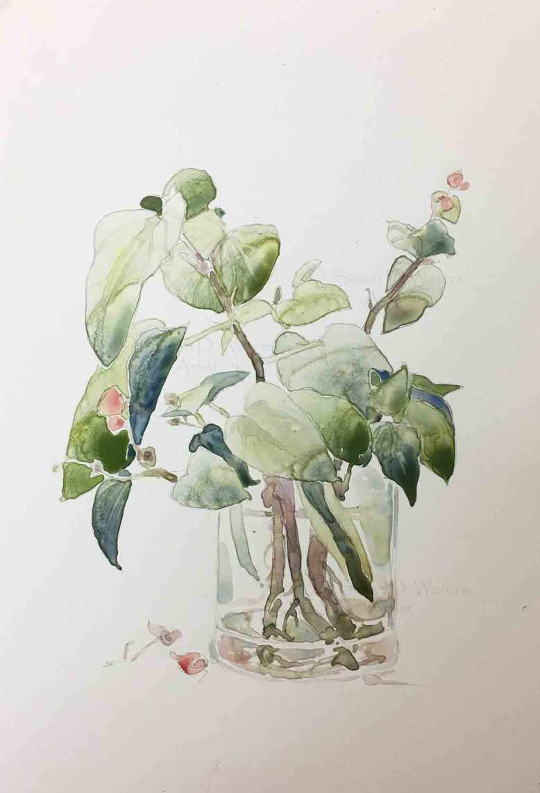 Begonia-Cutting-II,-Susan-Duke-Waters