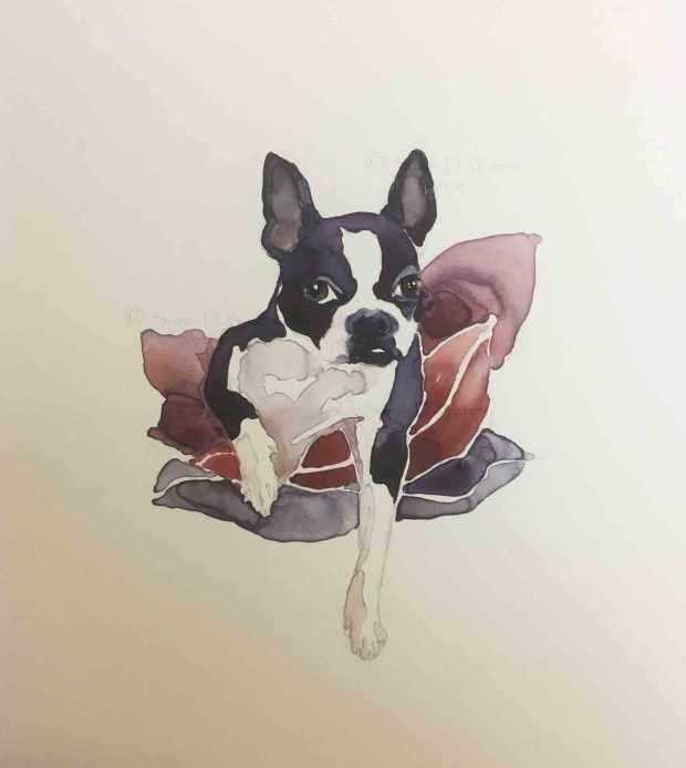 Boston-Terrier,-Susan-Duke-Waters