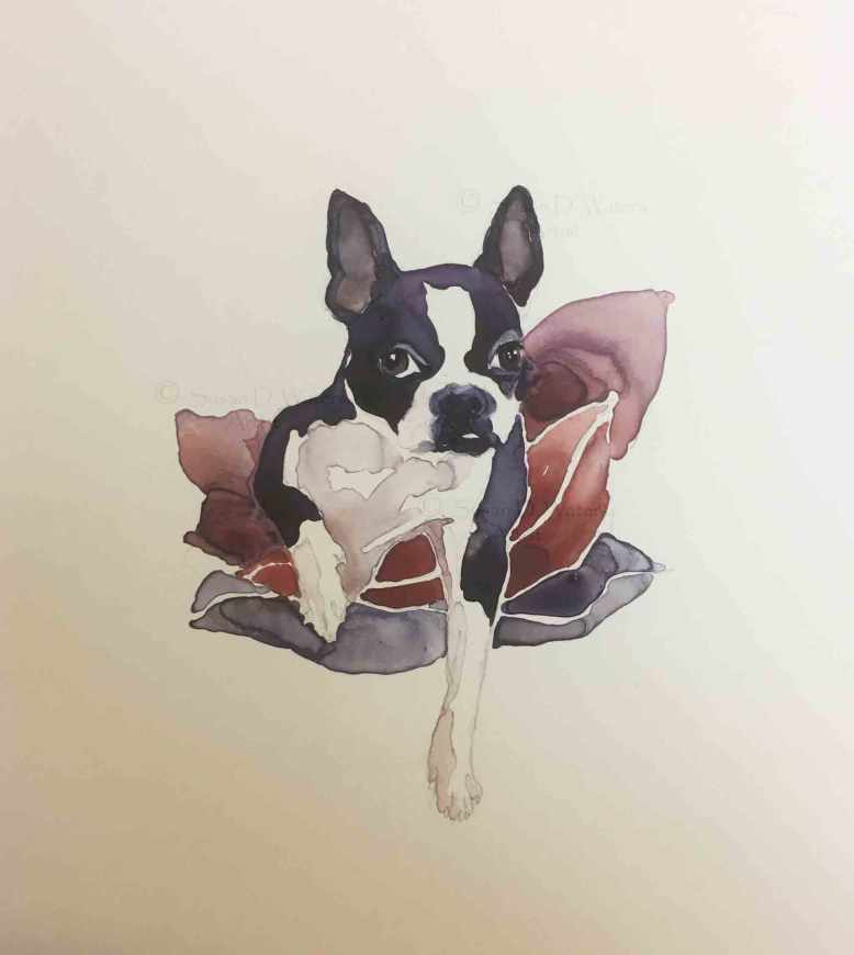 Boston-Terrier,-Susan-Duke-Waters