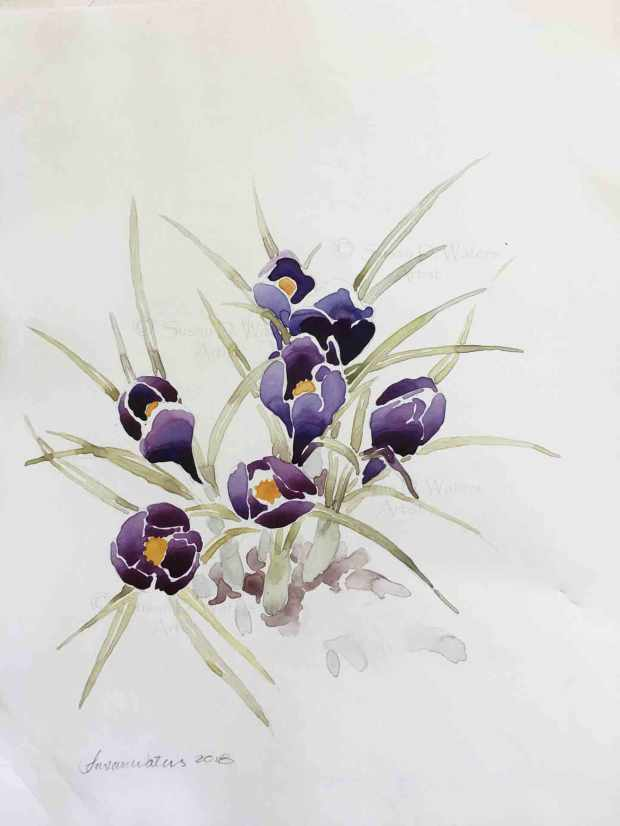 Crocus-in-Snow-III,-Susan-Duke-Waters
