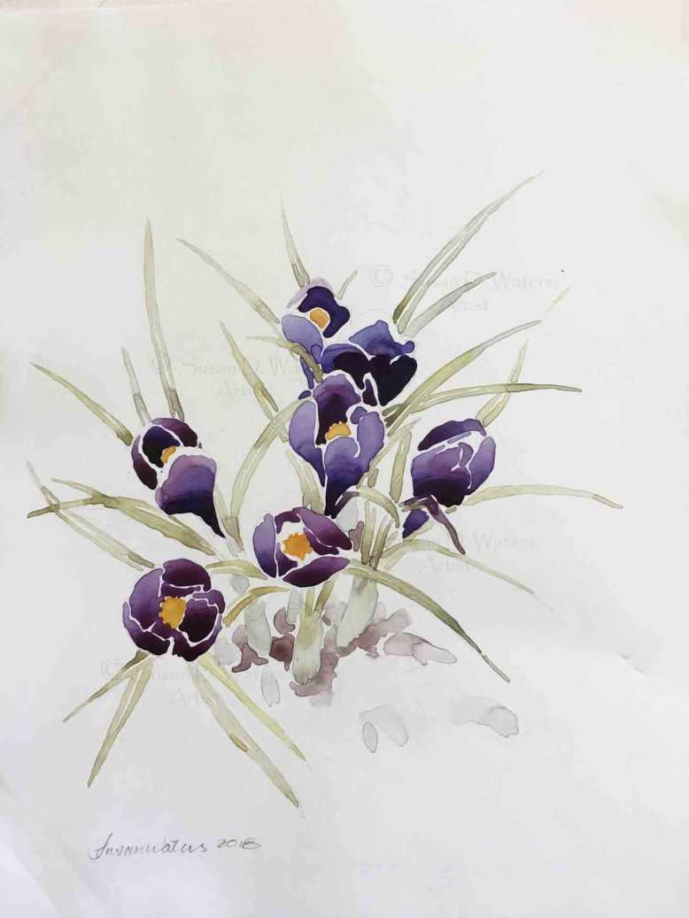 Crocus-in-Snow-III,-Susan-Duke-Waters