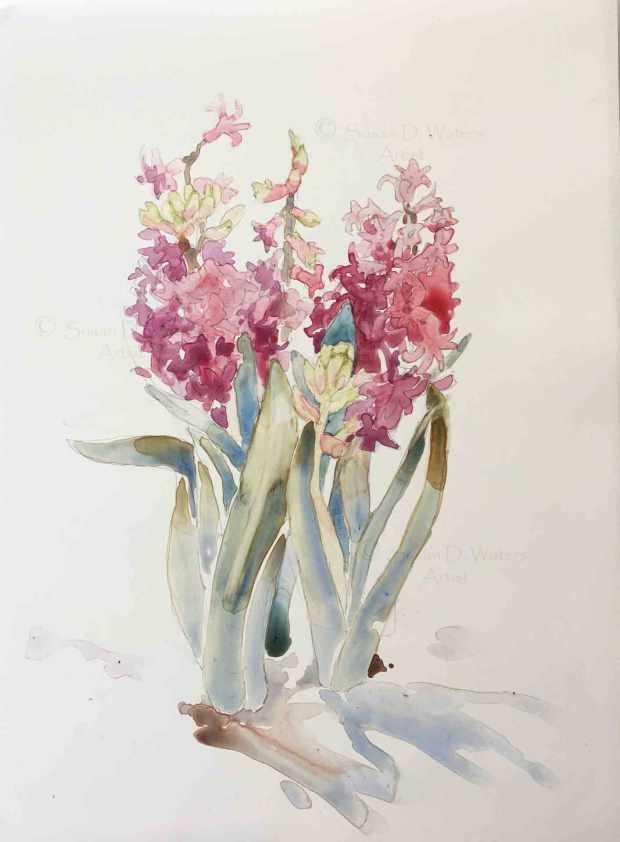 Hyacinths-in-Snow-II,-Susan-Duke-Waters