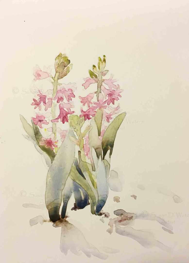 Hyacinths-in-Snow,-Susan-Duke-Waters