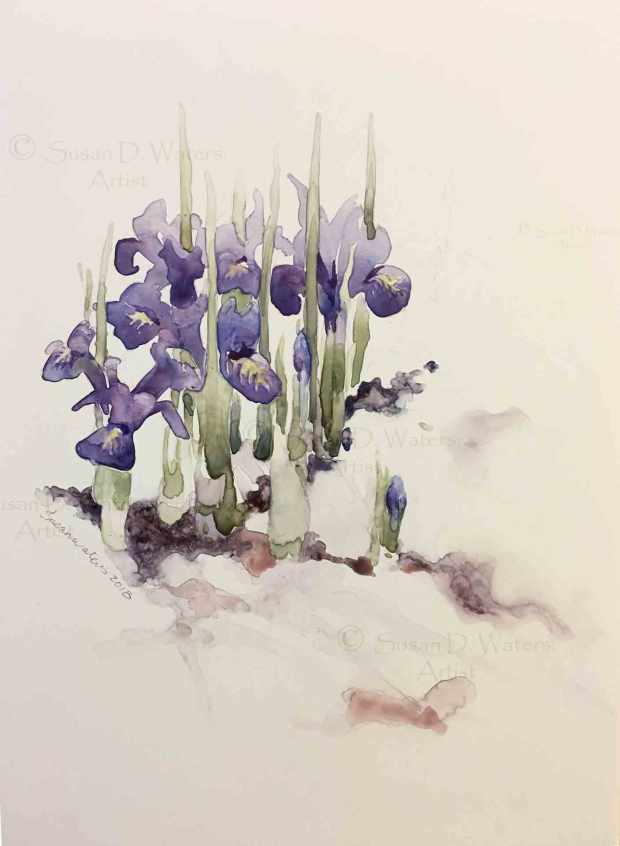Irises-in-Snow,-Susan-Duke-Waters