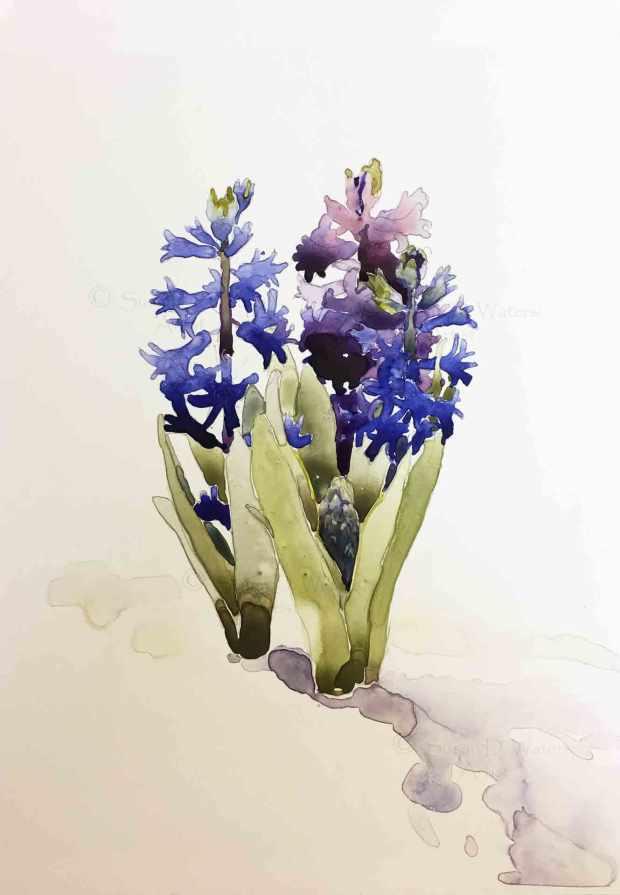 Purple-Hyacinths-in-Snow-II,-Susan-Duke-Waters