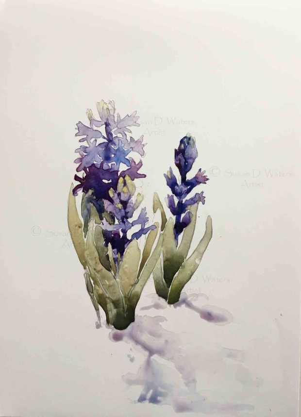 Purple-Hyacinths-in-snow,-Susan-Duke-Waters