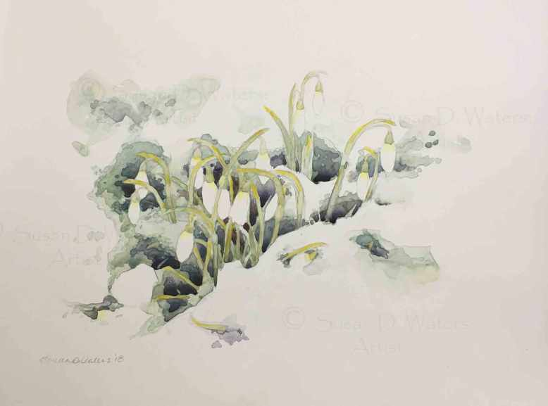 Snowdrops-in-Snow,-Susan-Duke-Waters