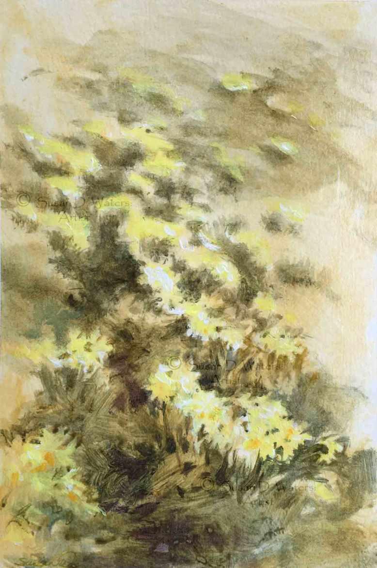 Daffodil-Field-II,-Susan-Duke-Waters