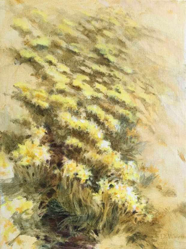 Daffodil-Field-III,-Susan-Duke-Waters