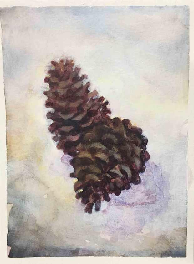 Pine-Cones,-Susan-Duke-Waters