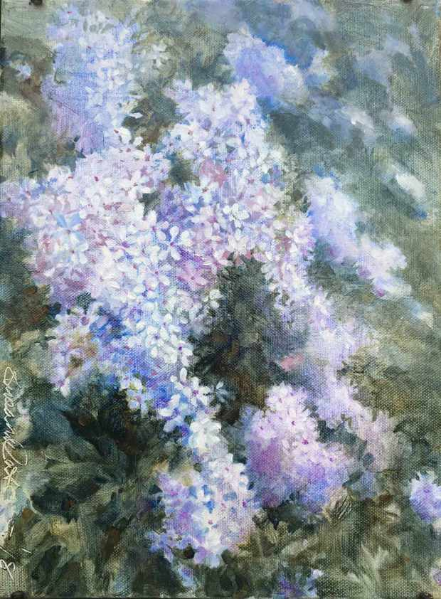 Woodland-Phlox,-Susan-Duke-Waters