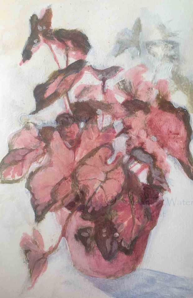 Pink-Caladiums,-Suan-Duke-Waters