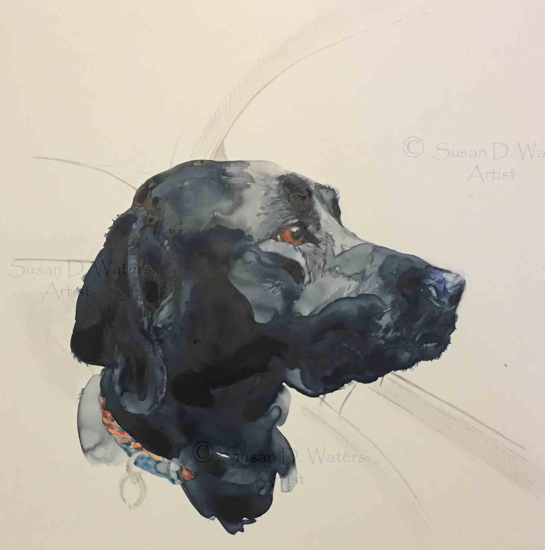 Labrador-in-Car,-Susan-Duke-Waters