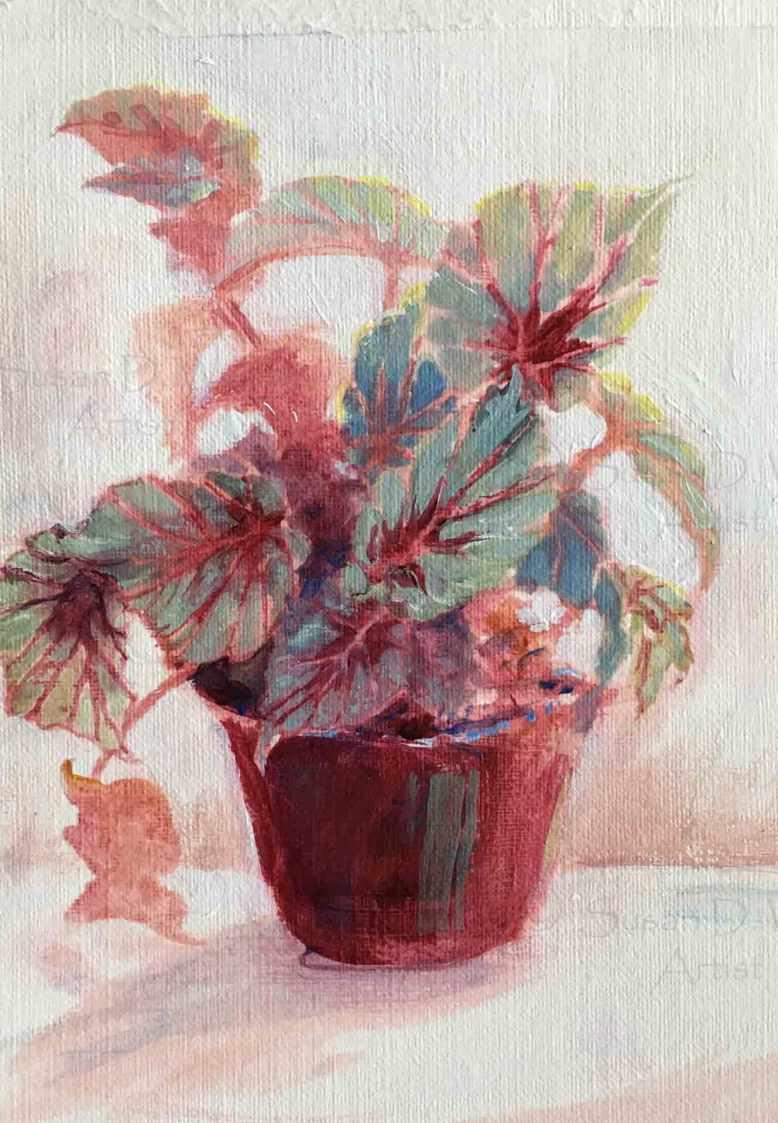 Rex-Begonia,-Susan-Duke-Waters