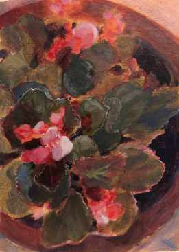 Semperflorens or Wax Begonia, painted in acrylic.