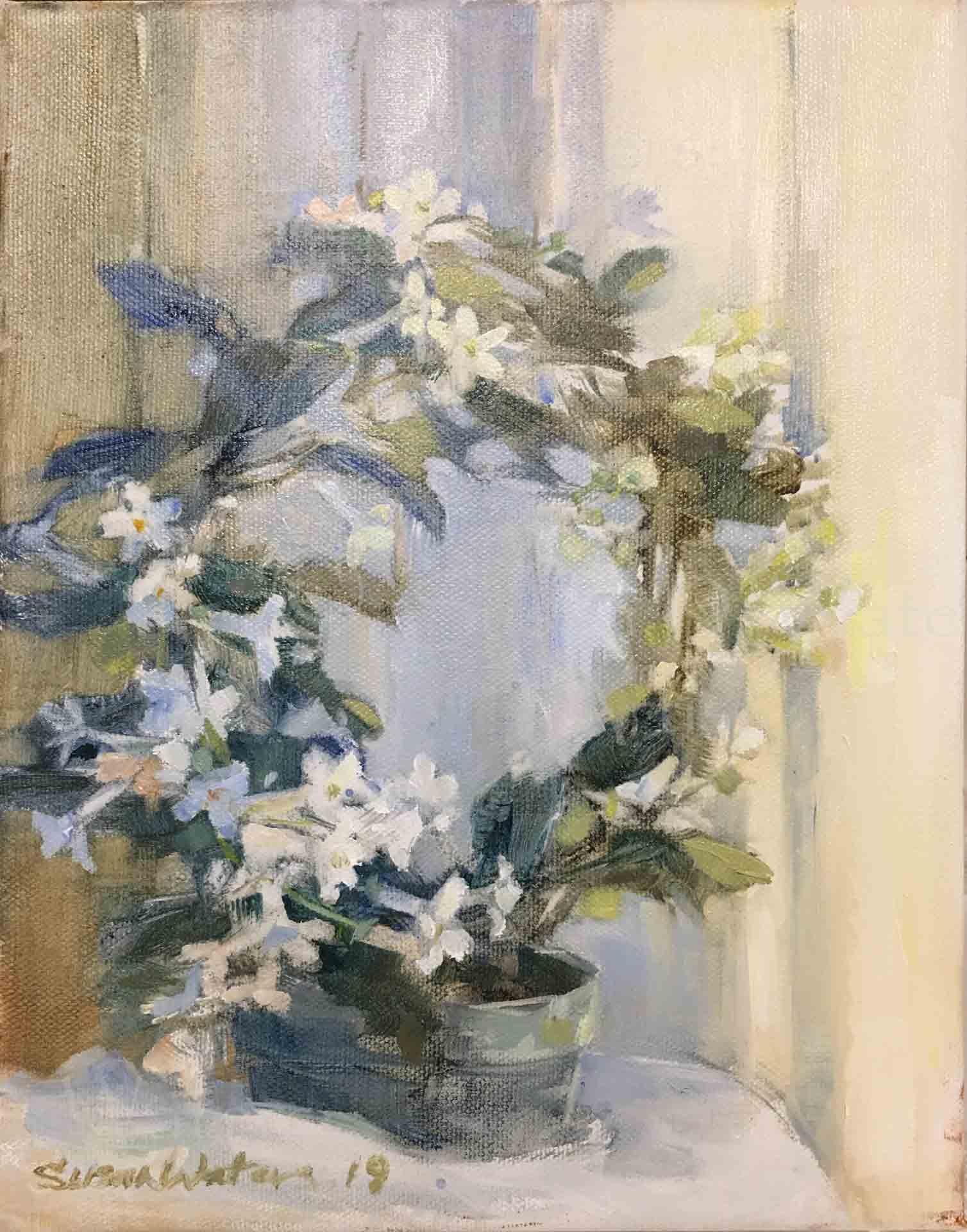 Stephanotis-Floribunda,-Susan-Duke-Waters