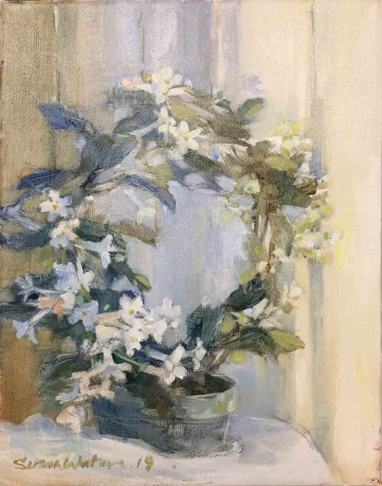 Stephanotis-Floribunda,-Susan-Duke-Waters