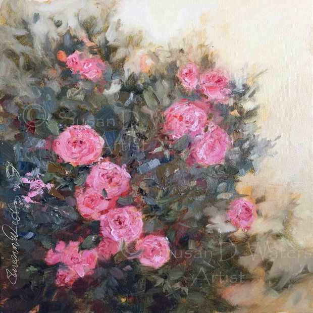 Bonica-Rose,-Susan-Duke-Waters
