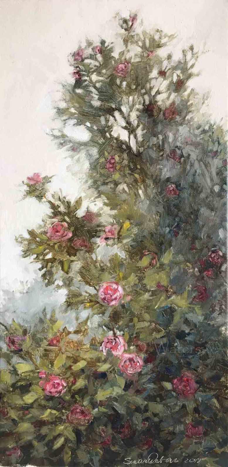 Camelia-japonica,-Susan-Duke-Waters