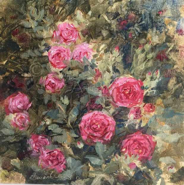 Front-Step-Roses,-Susan-Duke-Waters
