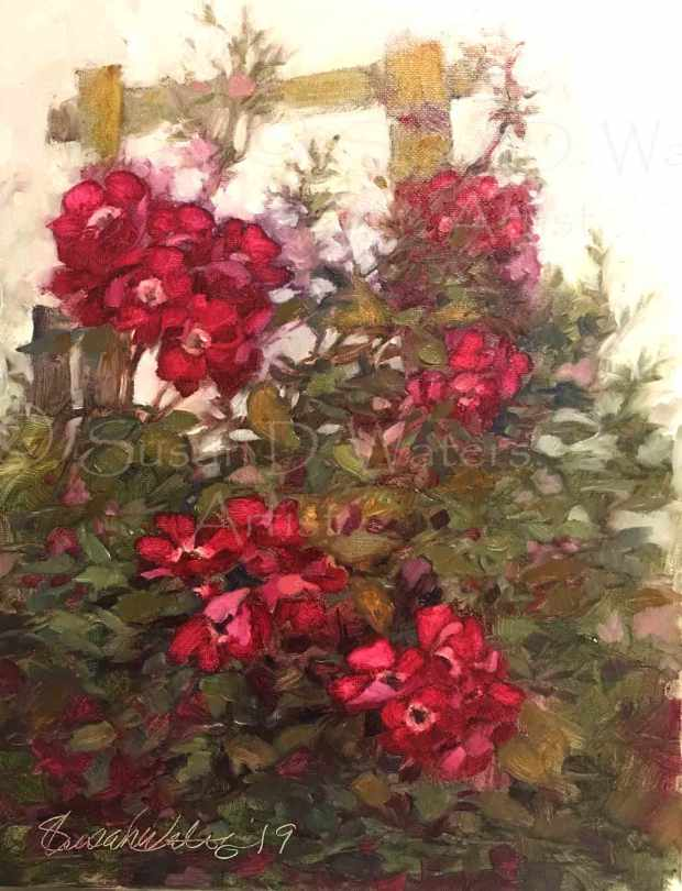 Single-Climbing-Rose,-Susan-Duke-Waters