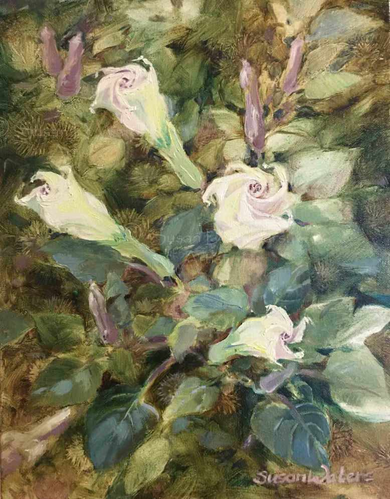 Datura, Susan Duke Waters