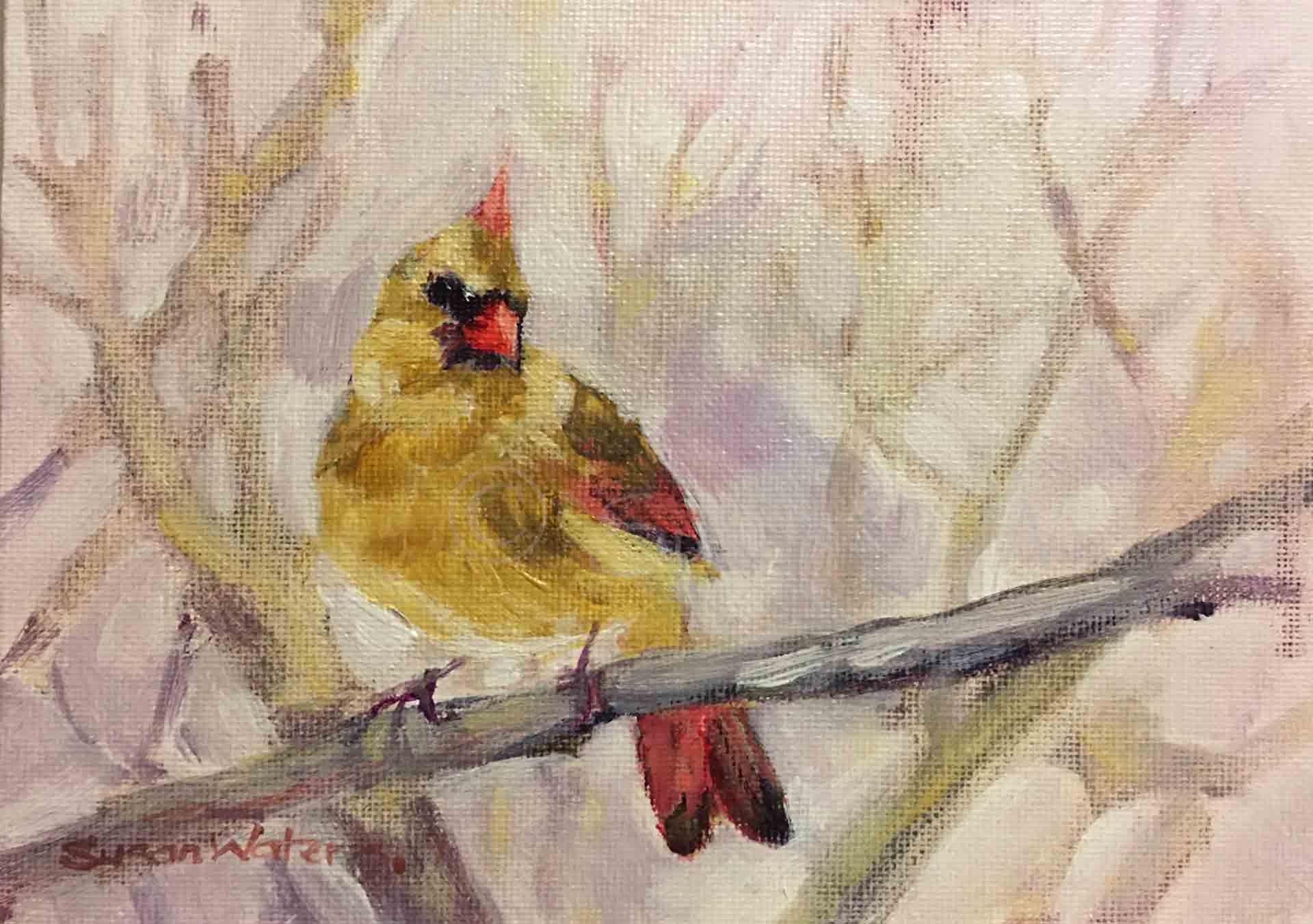 Female-Northern-Cardinal,-Susan-Duke-Waters