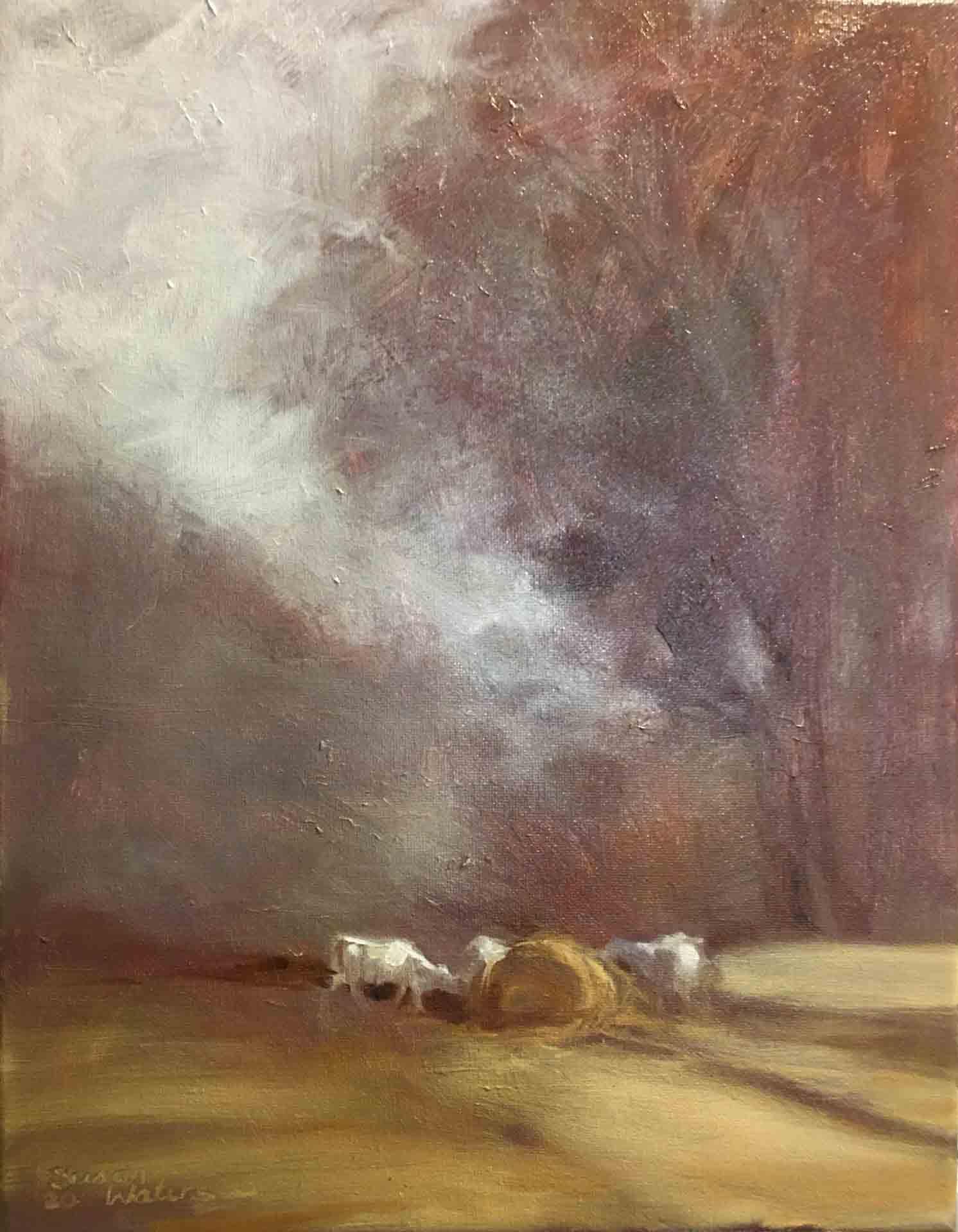 Winter-Charolais,-Susan-Duke-Waters