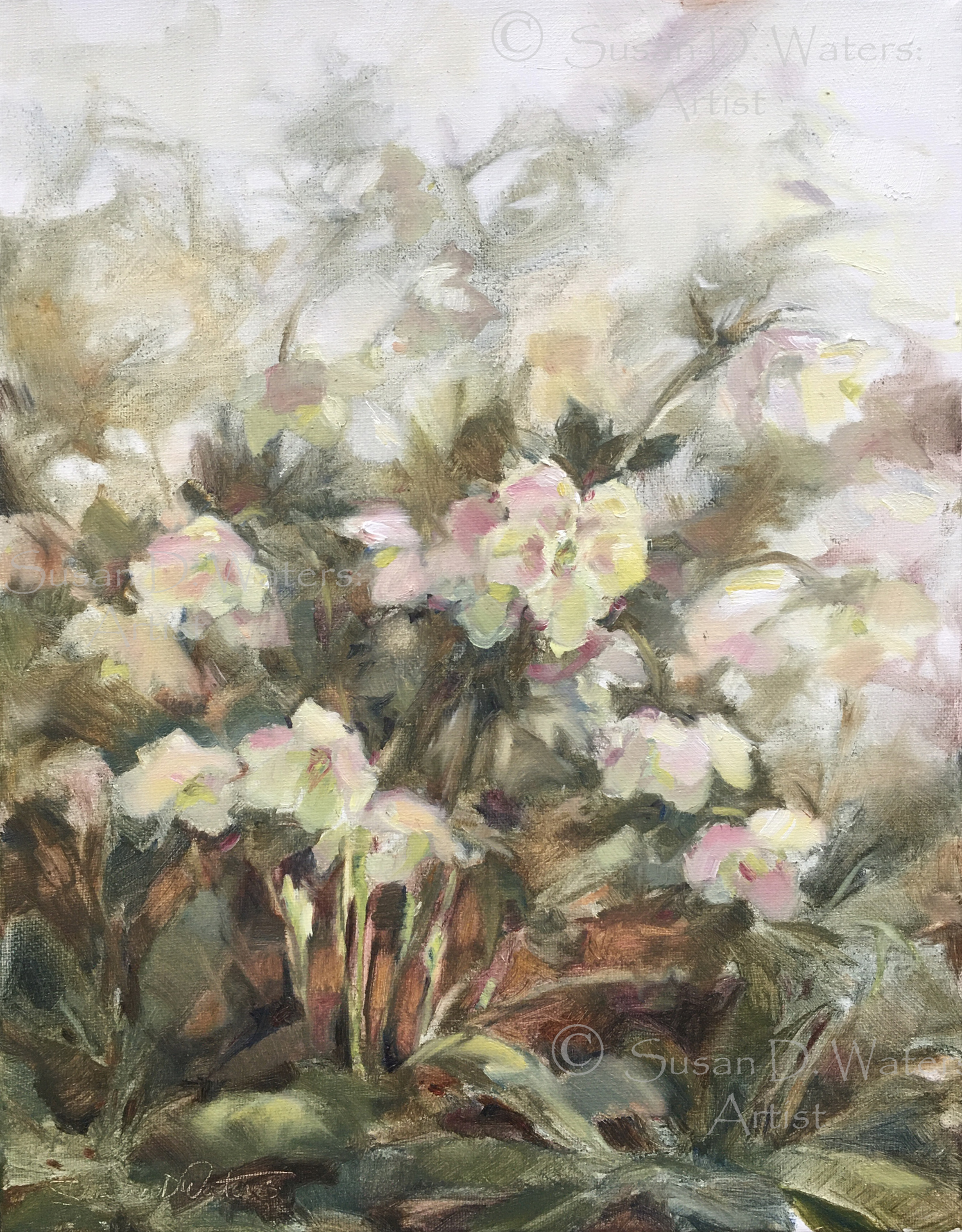 Hellebores, Susan Duke Waters