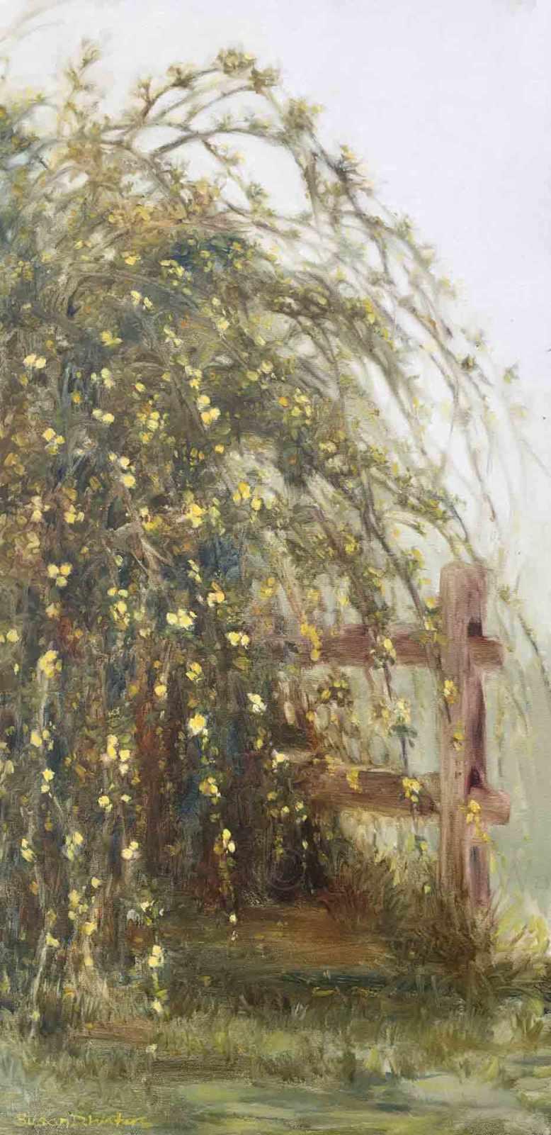 Lady-Banksia-Rosa,-Susan-Duke-Waters