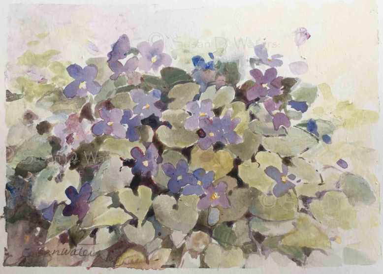 Violets-for-Mary,-Susan-Duke-Waters