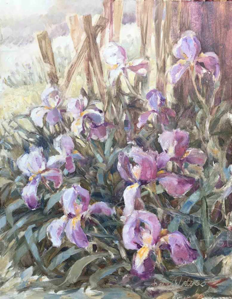 Purple-Iris,-Susan-Duke-Waters