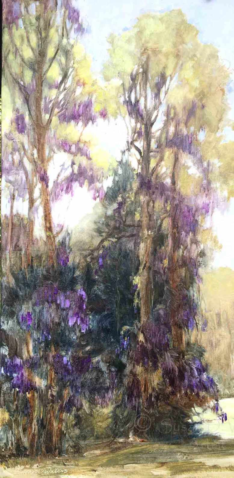 Wisteria,-Susan-Duke-Waters