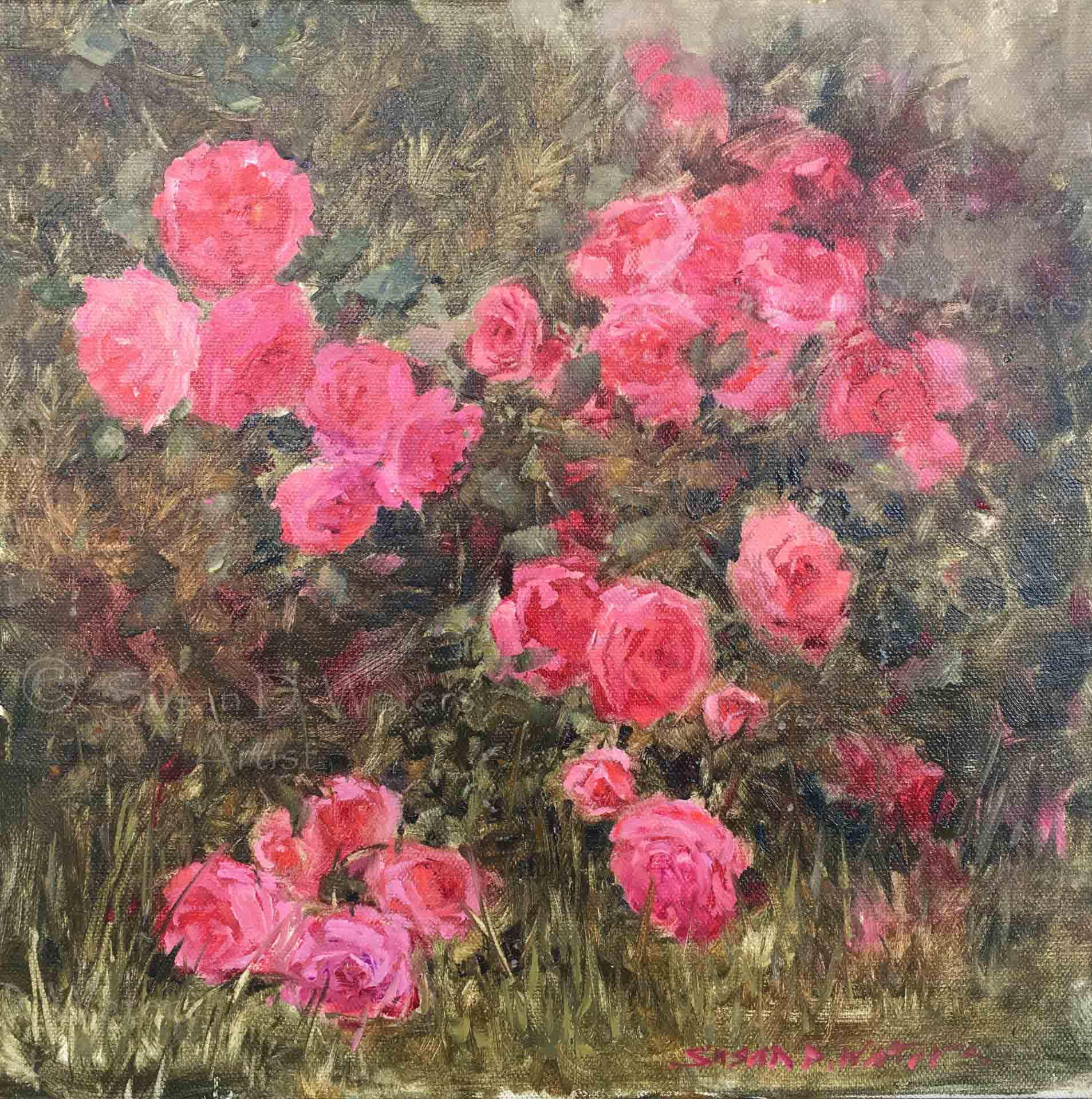 Carpet-Roses,-Susan-Duke-Waters
