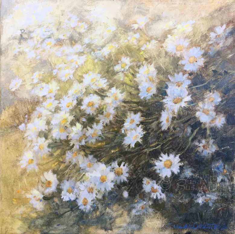 Ox-Eye-Daisy,-Susan-Duke-Waters