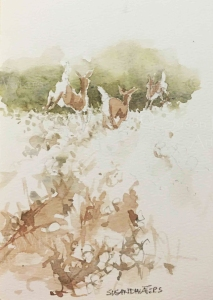 Deer in cotton field, watercolor, Susan Duke Waters
