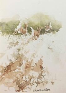 Deer in cotton field, watercolor, Susan Duke Waters